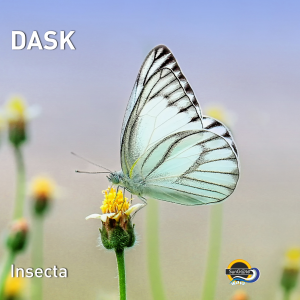Dask Insecta